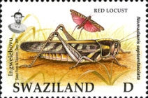 [Locust and Grasshoppers, type ZD]