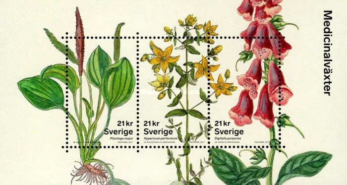 [Medicinal Plants - The 20th Anniversary of the Hagströmer Medico-Historical Library, type ]