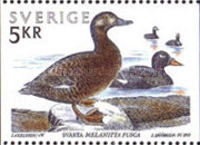 [Water Birds, type AVH]