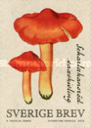 [Mushrooms, type CSB]