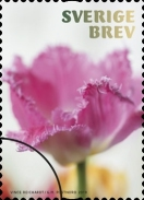 [Flowers - Tulips, Typ CYY]