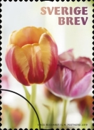 [Flowers - Tulips, Typ CZB]