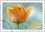 [Flowers - Tulips, Typ CZE]