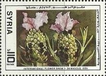[International Flower Show, Damascus, type AKZ]