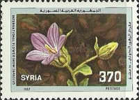 [International Flower Show, Damascus, type AMO]