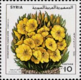 [The 23rd International Flower Show, Damascus, type AVJ]