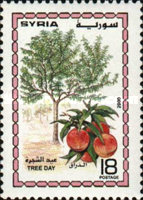 [Tree Day, type AZG]