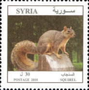 [Syrian Animals, type BKG]