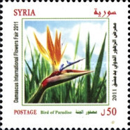 [Damascus International Flower Festival, type BLE]