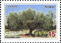 [Tree Day - Olive tree, Typ BME]