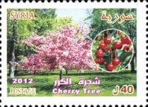 [Tree Day - Cherry Tree, Typ BMT]