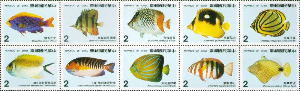 [Coral Reef Fish, Typ ]