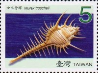 [Seashells of Taiwan, Typ DCV]