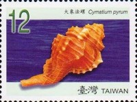 [Seashells of Taiwan, Typ DCY]
