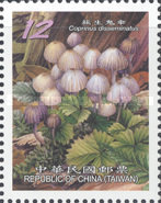 [Mushrooms - White Frame, Typ DHI]