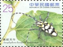 [Long-Horned Beetles, Typ DIC]