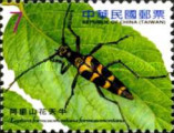 [Insects - Long-horned Beetles, Typ DNM]