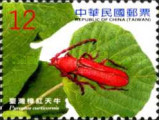 [Insects - Long-horned Beetles, Typ DNN]
