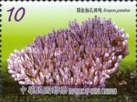 [Corals of Taiwan, Typ DUJ]