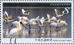 [Taijiang National Park, type ENF]