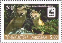 [WWF - Altai Weasel, type VD]