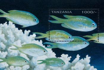 [Tropical Fish, Typ ]
