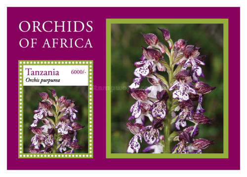 [Flowers - Orchids of Africa, type ]