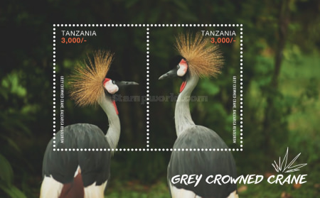 [Birds - Grey Crowned Crane, Typ ]