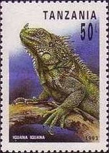 [Reptiles, type BFD]