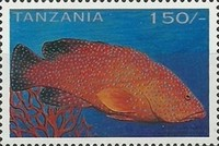 [Tropical Fish, type COL]