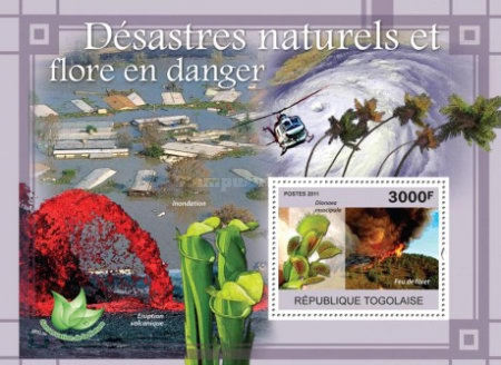 [Natural Disasters & Endangered Flora, type ]