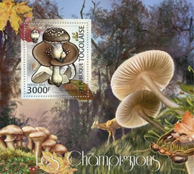 [Fauna & Flora - Mushrooms, type ]