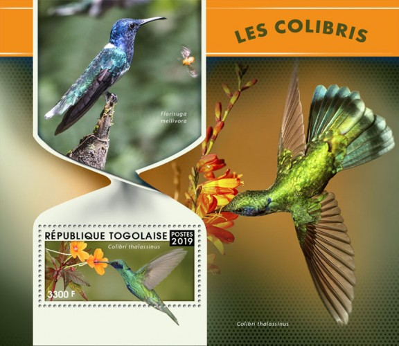 [Hummingbirds, type ]