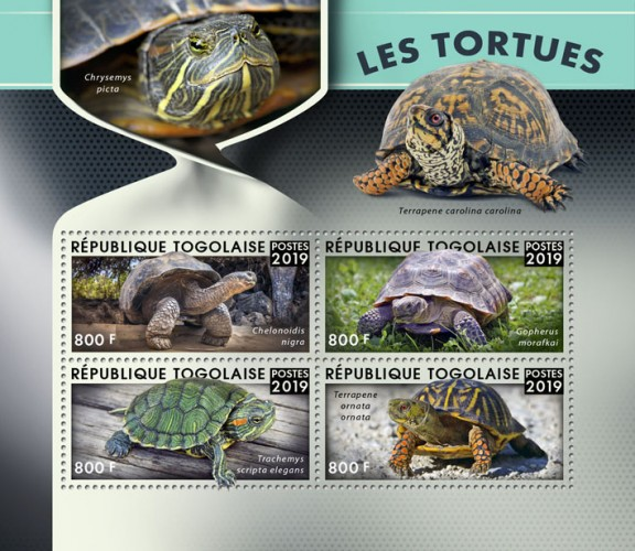 [Fauna - Turtles, type ]