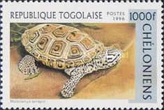 [Turtles, Typ CCB]