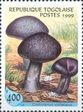 [Fungi from around the World, Typ COY]