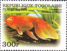 [Breeds of Goldfish, Typ CTL]