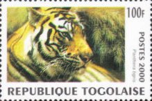 [Big Cats from around the World, type CUJ]