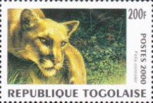 [Big Cats from around the World, type CUL]