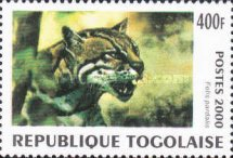 [Big Cats from around the World, type CUN]