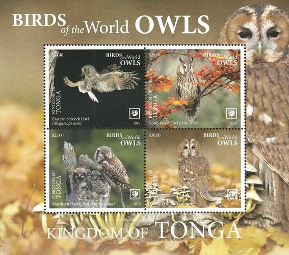 [Birds of the World - Owls - White Frame on 2 Sides, type ]
