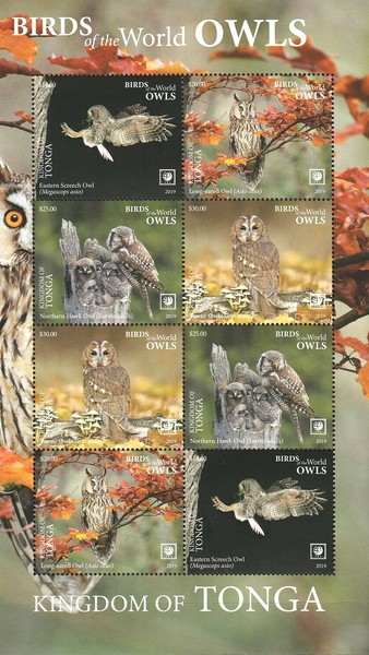 [Birds of the World - Owls - Without Frame, Typ ]
