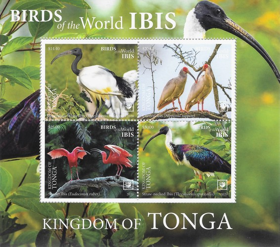 [Birds of the World - Ibis, type ]