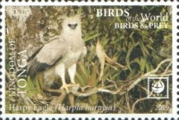 [Birds of the World - Birds of Prey - White Frame, type CAR]