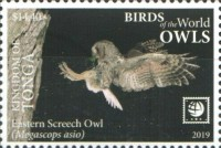[Birds of the World - Owls - White Frame, type CAV]