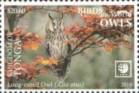 [Birds of the World - Owls - White Frame, type CAW]