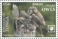 [Birds of the World - Owls - White Frame, type CAX]