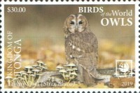 [Birds of the World - Owls - White Frame, type CAY]