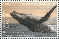 [Marine Life - Whales and Dolphins of the World - White Frame, type CBC]