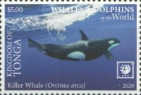 [Marine Life - Whales and Dolphins of the World - White Frame, type CBD]